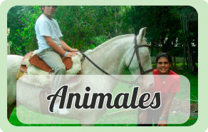 banner-animales